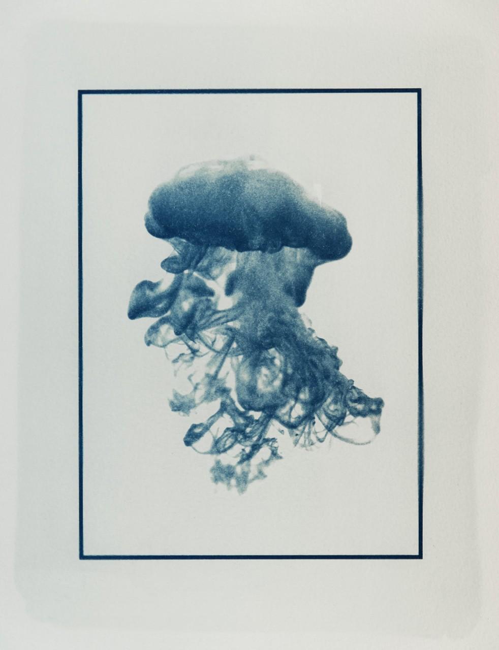 Cyanotypie: Farbqualle 3 • Unikat