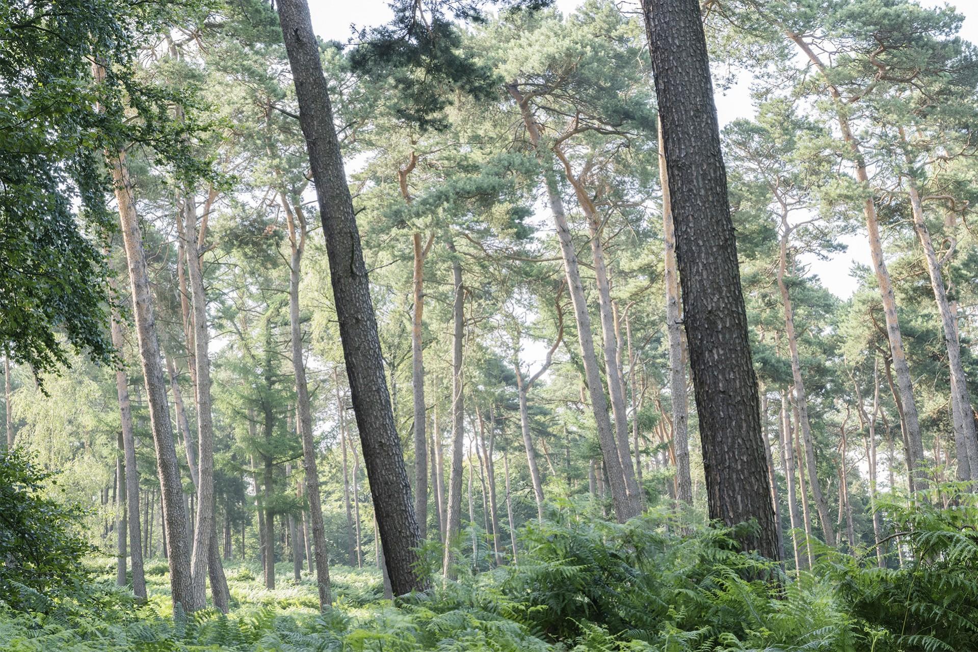 WaldRindenDoppel