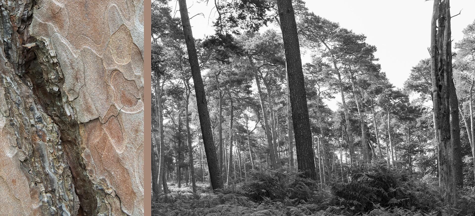 WaldRindenDoppel Kiefern I • Lambda-Print auf KODAK Pro Endura, Alu-Dibond®, 110 x 50 cm, gerahmt als Art-Box • Auflage: 5 + 2 Artist's Proof