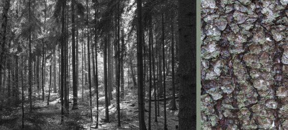 Fotos aus meiner Serie WaldRindenDoppel, Tannen IV
