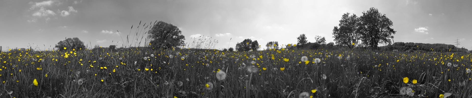 Panorama Wiese + Bäume sw/gelb • Lambda-Print auf FUJIFILM Crystal Archive DPII, Diasec®/Acryl, 120 x 25 cm • Auflage: 5 + 2 Artist's Proof